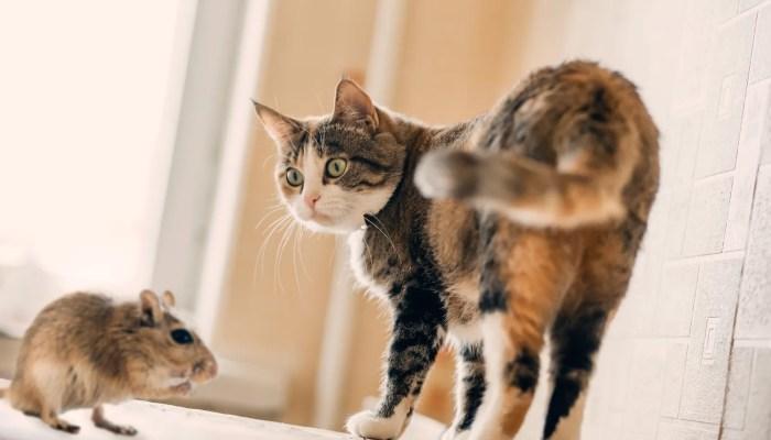Muizen minder bang voor katten door aanraking met kattenurine