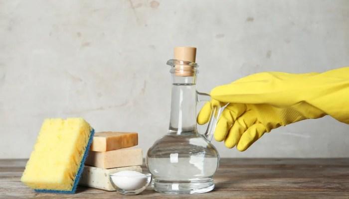 Azijn als bestrijdingsmiddel: welk ongedierte is gevoelig voor azijn?
