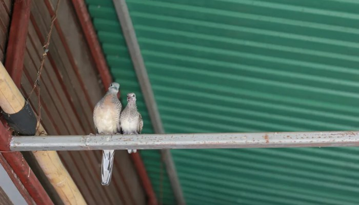 Wistjedatjes – Vogels