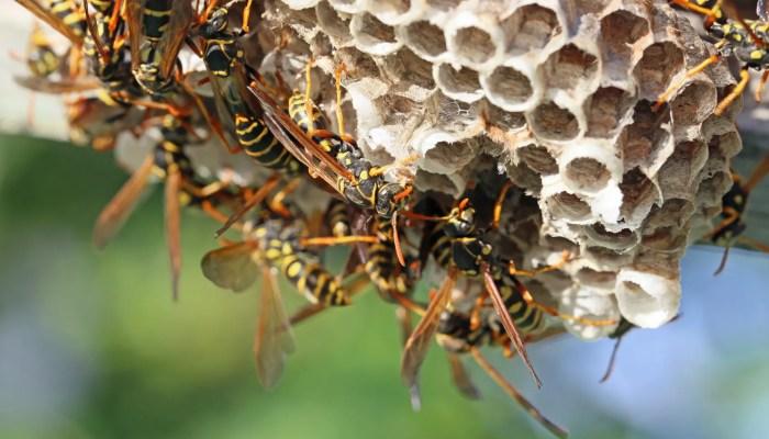 Hoornaar is erg nuttig voor de mens