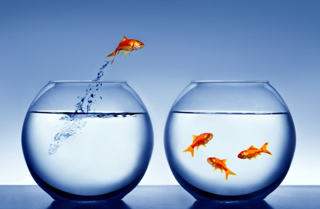 Fish joining others in another goldfish bowl