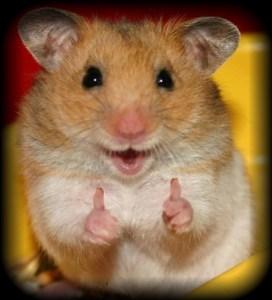 hamster tips