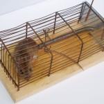 Rat Control - Humane rat trap