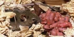 mouseandbabys