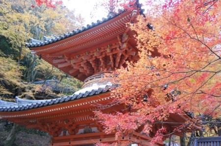 岸和田の紅葉