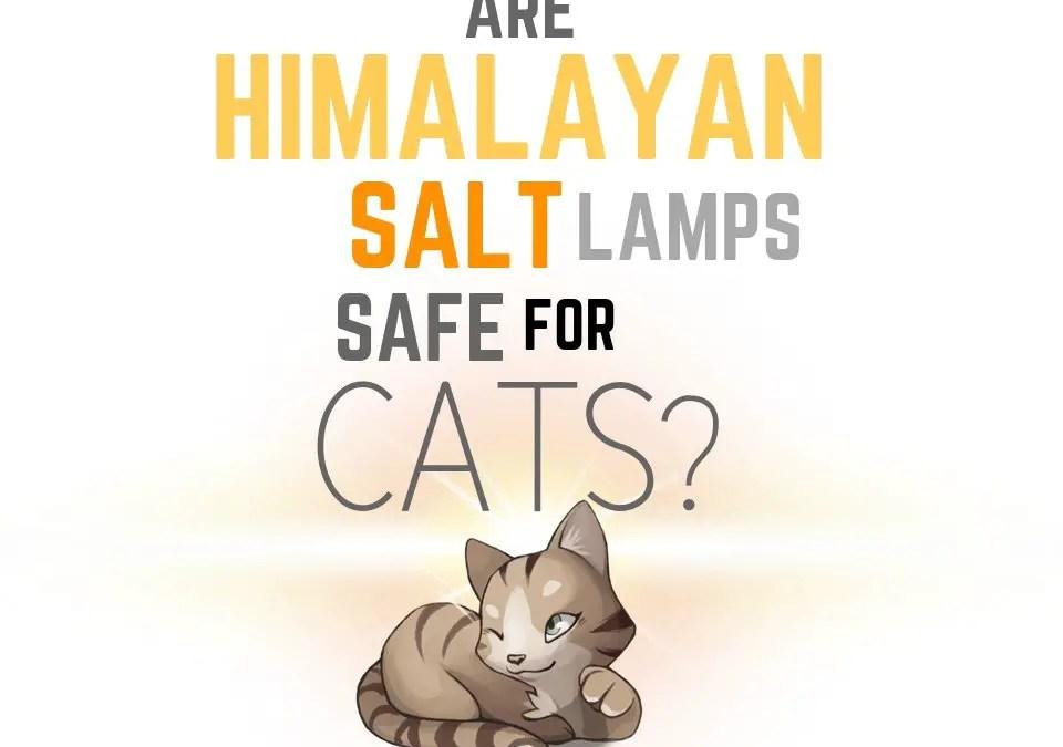 Are Himalayan Salt Lamps Safe for Cats?