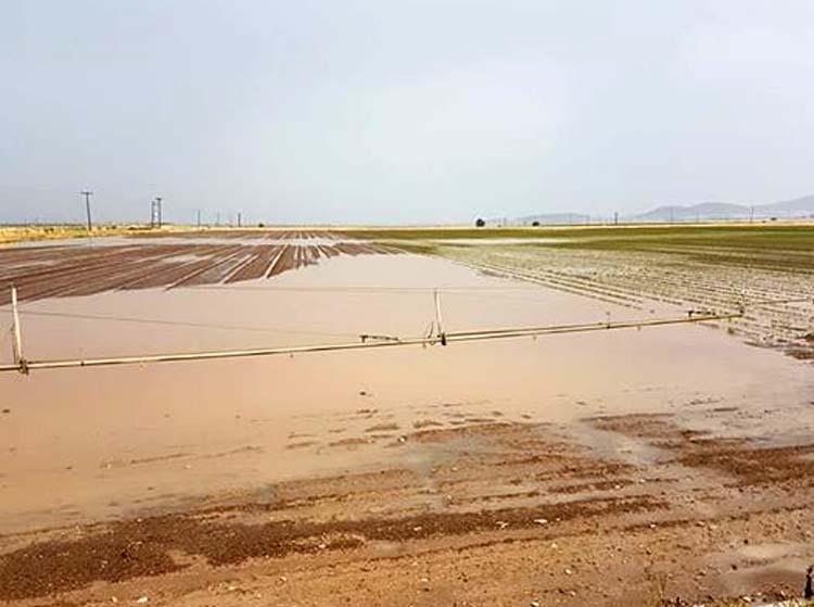 """""""Χαριστική βολή"""" στους Λαρισαίους αγρότες η σημερινή βροχόπτωση (φωτό)"""