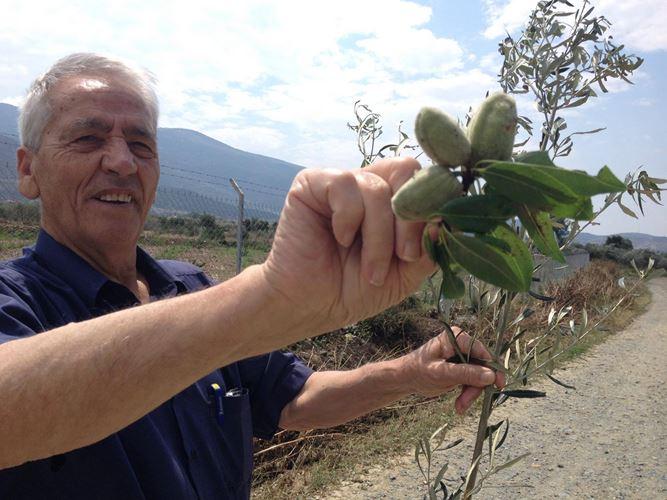 Βιβλική καταστροφή σε καλλιέργειες από το χαλάζι στο δήμο Τεμπών - Δείτε φωτογραφίες