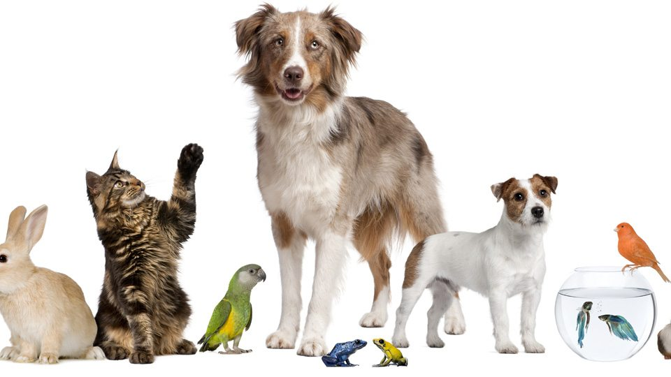 Pet Stores and the Law