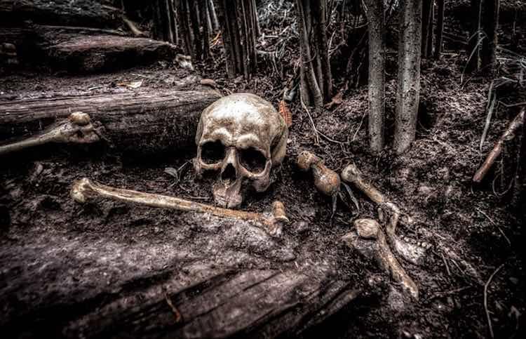 forensic science evidence - skull