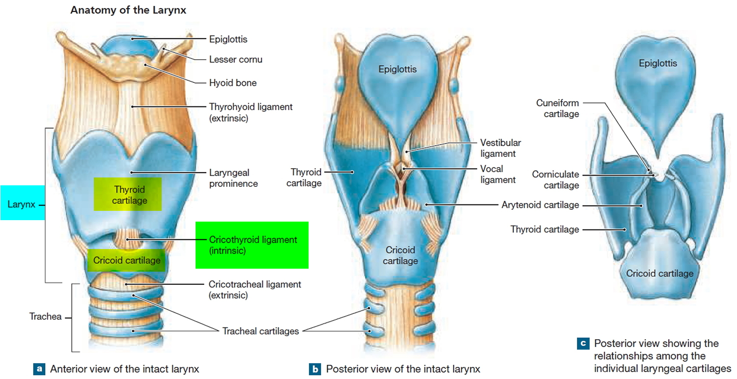 Respiration Types Of Respiration And Anatomy Of Human