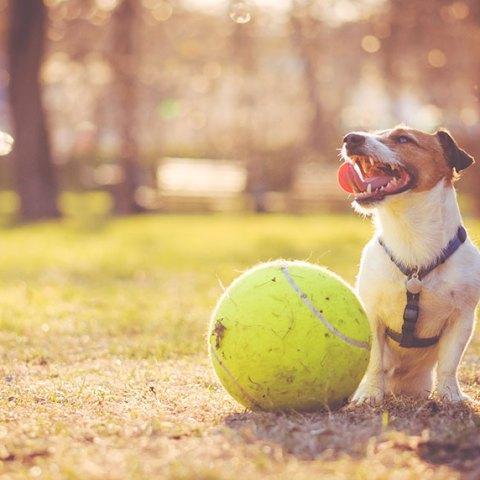 Start a Pet Sitting Business (Self-Paced Tutorial)