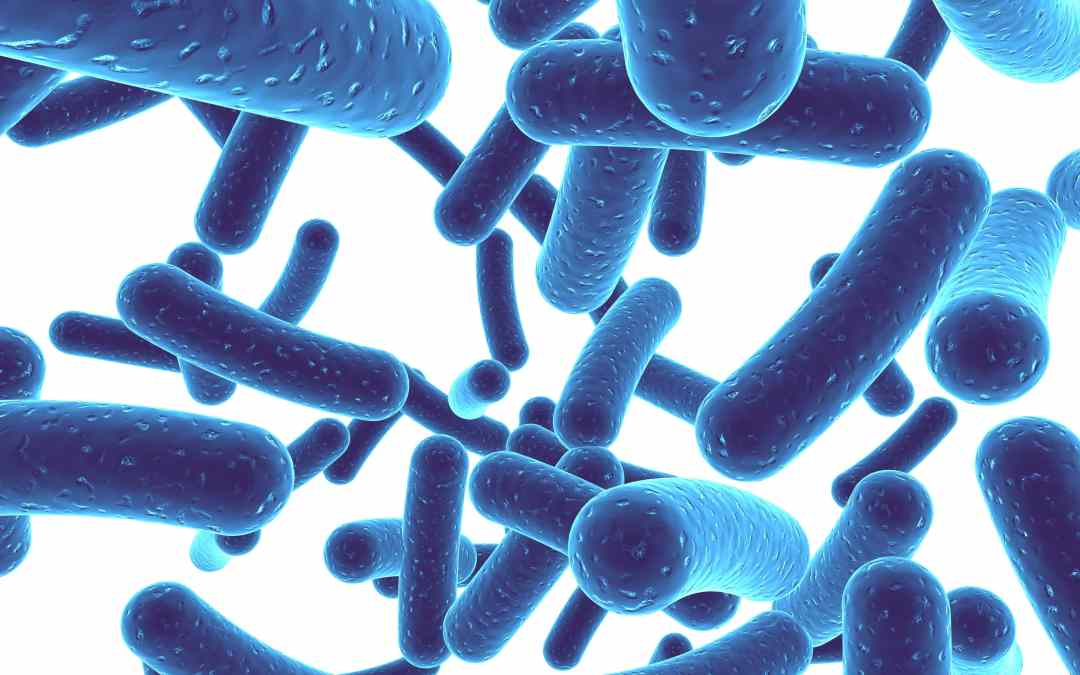 Probiotics And Their Use As A Dietary Supplement
