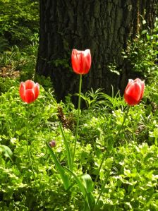 Spring Flowers onlineflowergarden.com