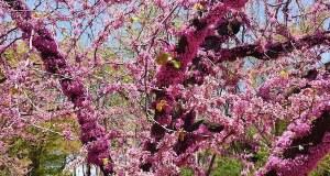Central Park New York © onlineflowergarden.com