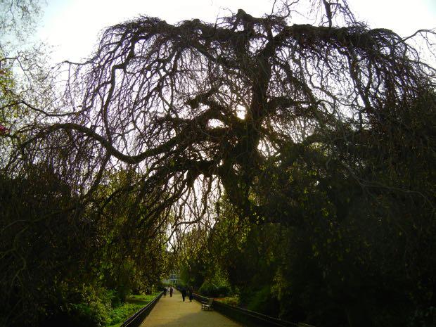 Springtime Hyde Park, London UK