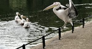 St James's Park, London