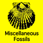Miscellaneous Fossils