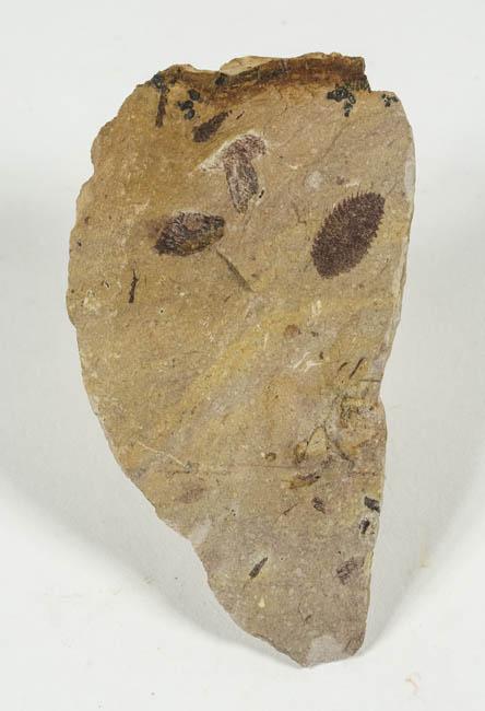 1859 DSC_1838