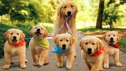 Ideal Age for Pups to Attend Dog Boarding and Day Cares | Online Guider