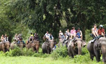 A record 185,644 tourists visited Chitwan in 2018-19