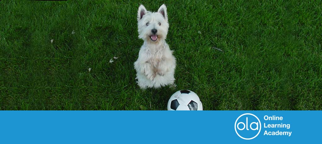 Dogs and football – four memorable canine capers