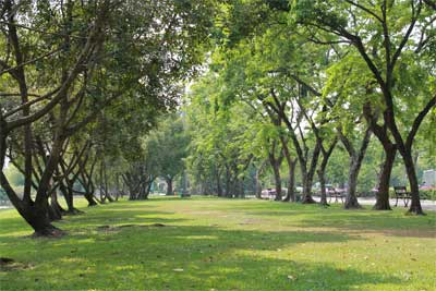 สถานที่ท่องเที่ยวภาคกลาง - ประวัติหอราชมงคล สวนหลวง ร.9 – ท่องเที่ยวกรุงเทพ