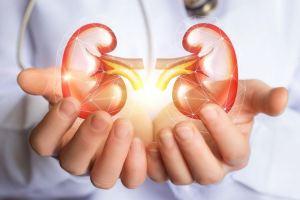 Best Food For Kidney Health