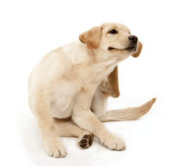 Tips To Prevent Your Dog From Going All Scratchy