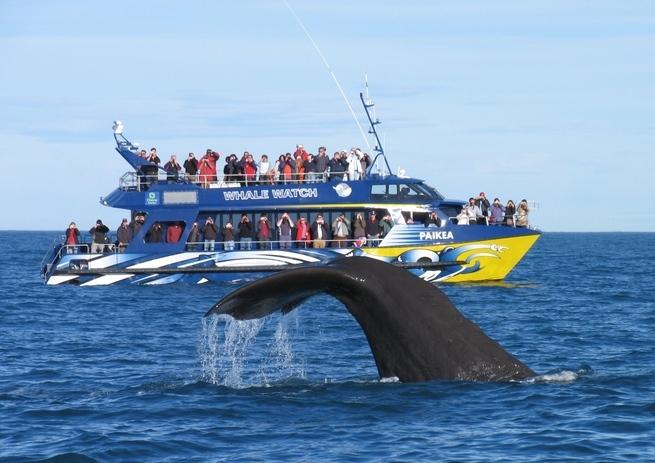 Go Whale Watching Kaikoura