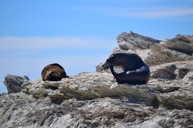 Go Watch As seal Colony Take A Nap