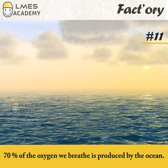 #11 70% of the oxygen we breathe is produced by the ocean