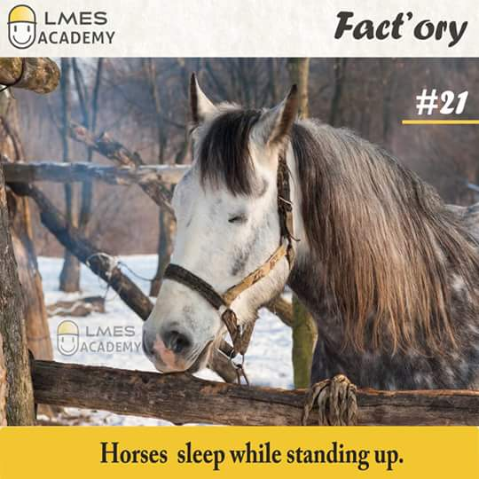 #21 Horses sleep while standing up.
