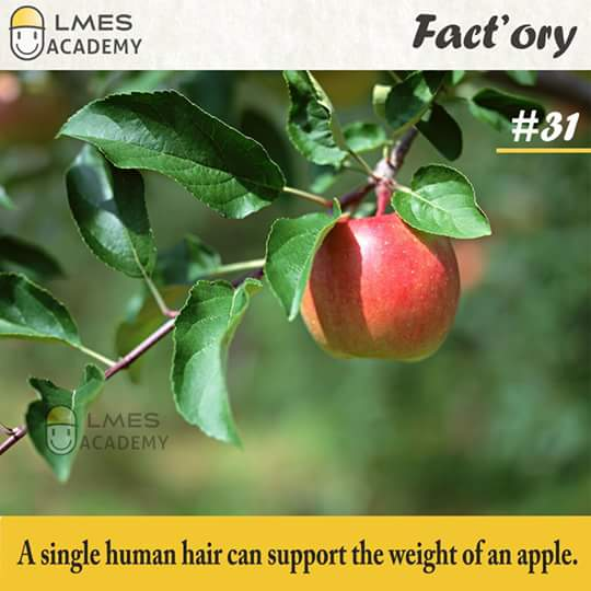 #31 A single human hair can support the weight of an apple.