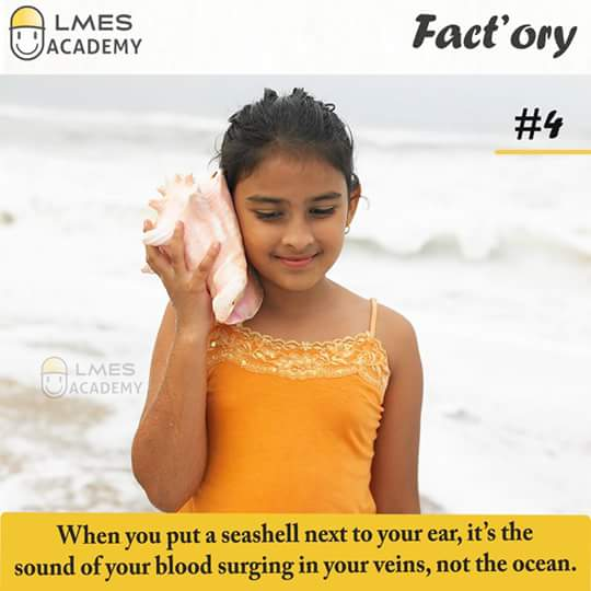 #4 When you put a seashell next to your ear, it's the sound of your blood surging in your veins, not the ocean.