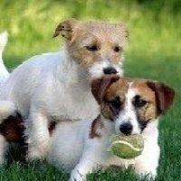 Introducerea unui câine nou într-o casã cu alți câini