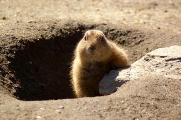 Stop making the same mistakes: Preventing a 'Groundhog Day' scenario