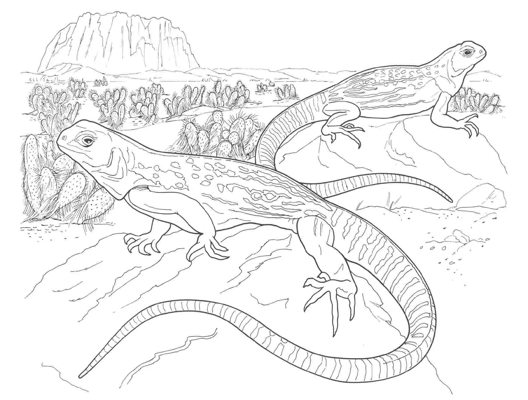 iguana coloring pages.html