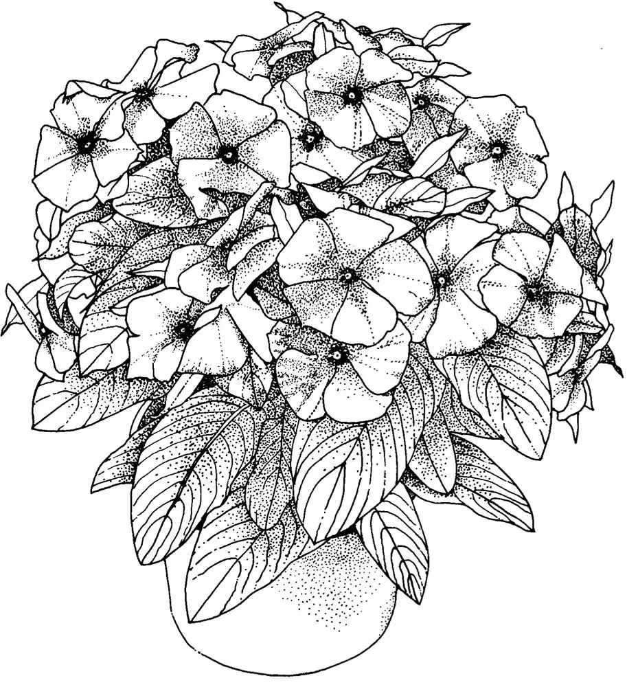 pages for flowers adults want to colour flower coloring pages
