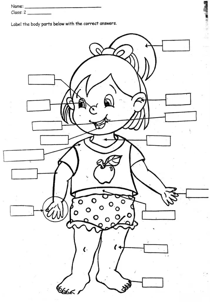 coloring pages for kidsparts of the body  only coloring