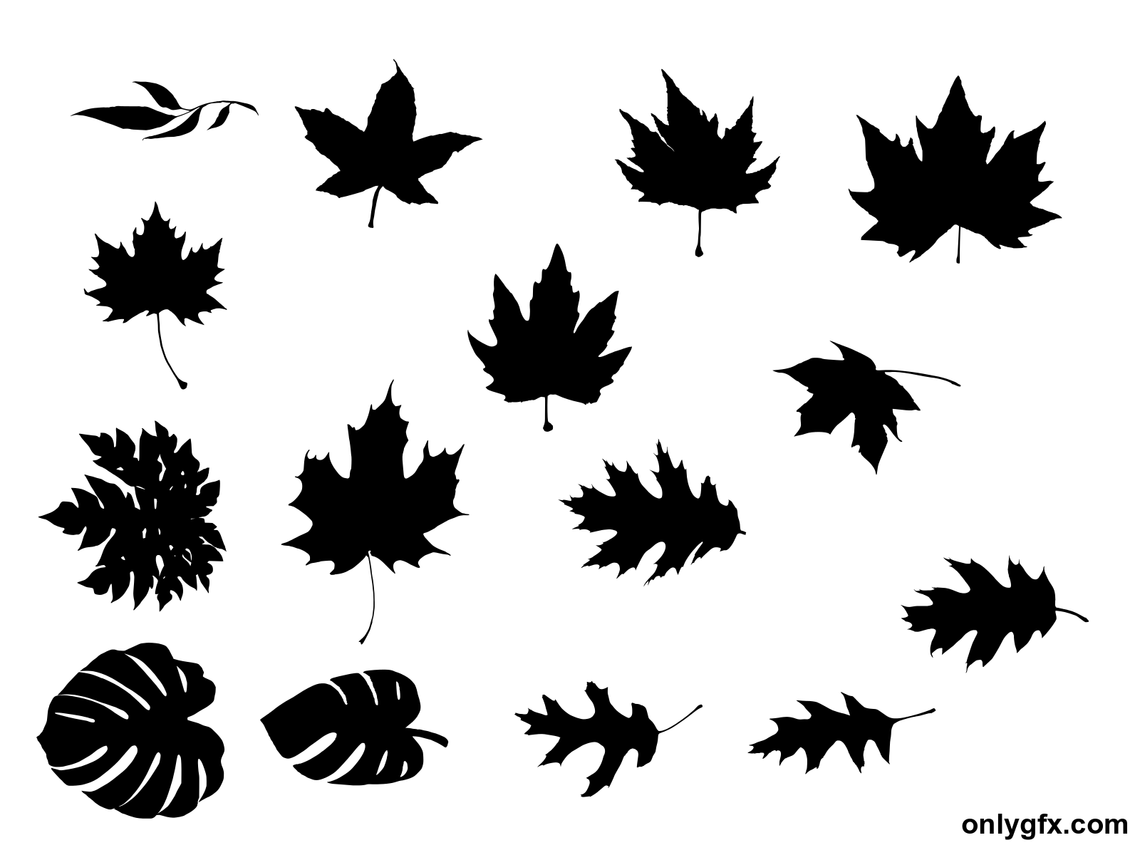 15 Leaf Silhouette Transparent