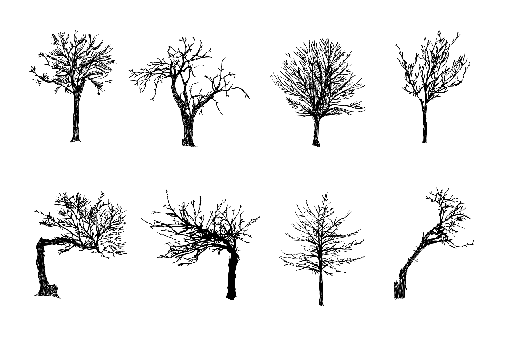 8 Tree Drawing Transparent