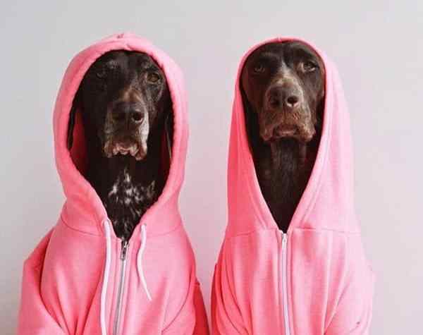 dogs style