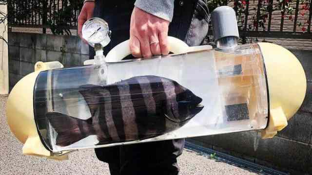 live fish carrying cases