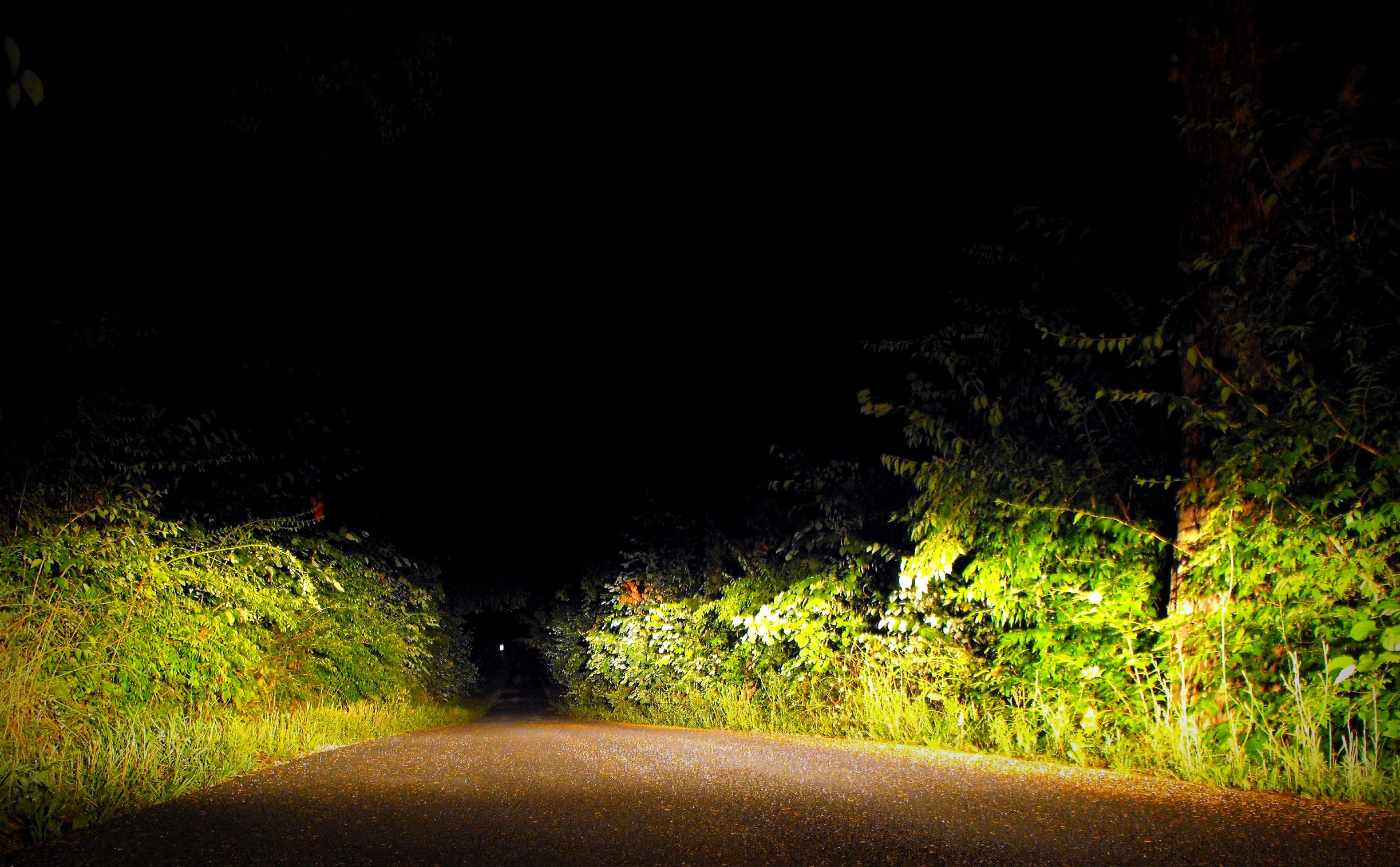 6 Reasons This Haunted Kentucky Road is Bone-Chilling
