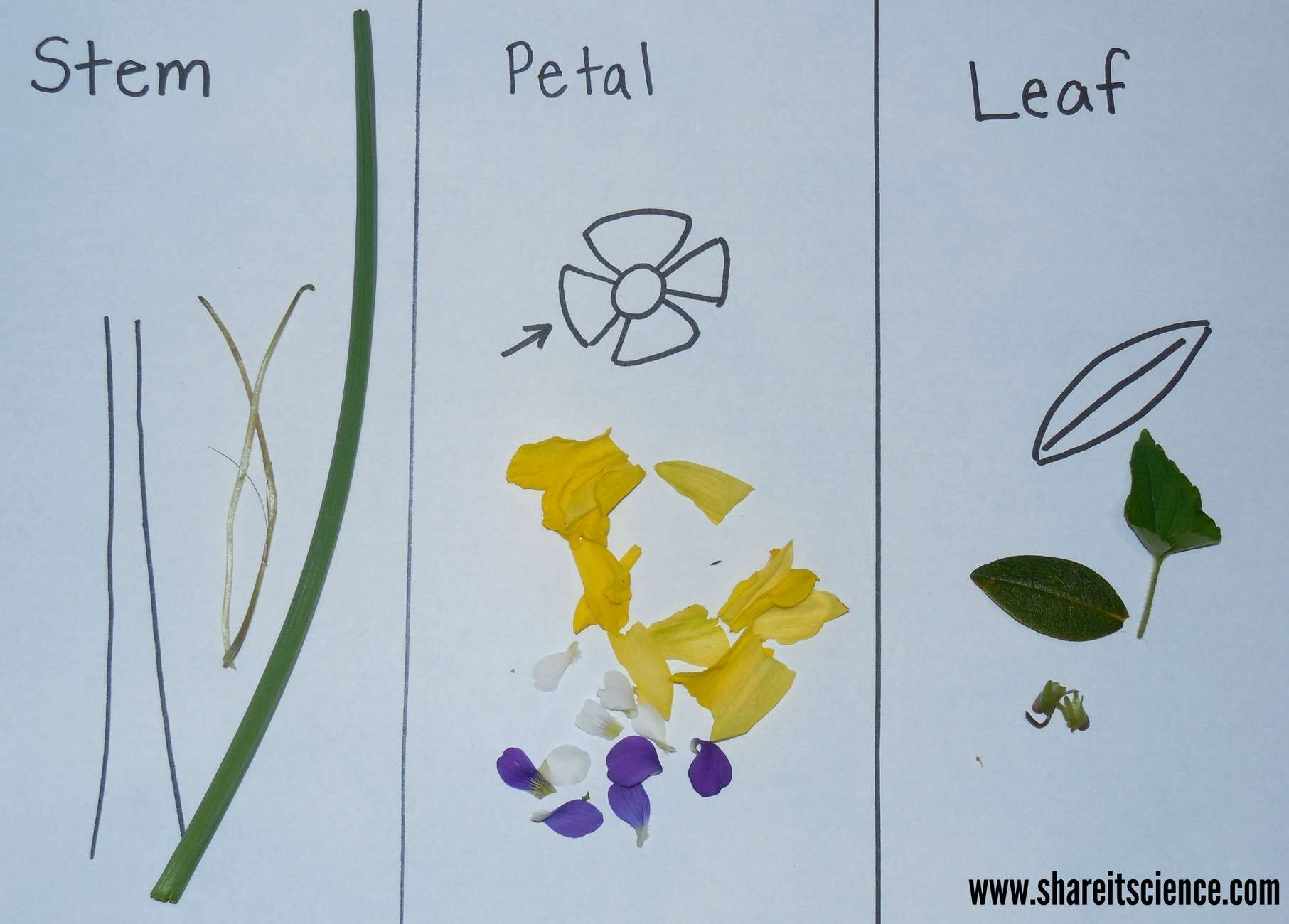 Exploring Flowers Activities From Preschool To High School Only Passionate Curiosity