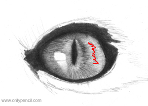 cat eye pencil drawing