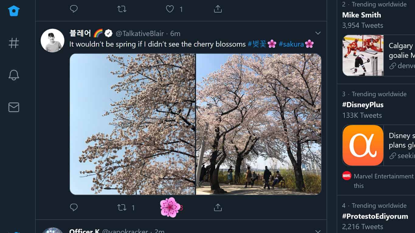 Sakura animation in the Windows 10 Twitter app