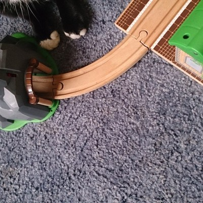 #taspic Cat #feeties looking at railway...