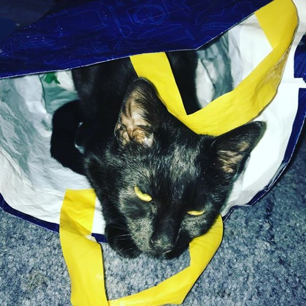 Lily-cat in a bag.....
